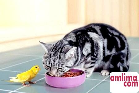 Чим годувати кішку, або Меню для маленького хижака