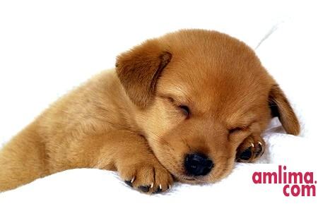 цистит у собак лікування