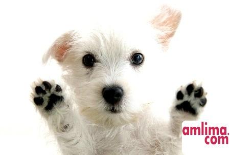 цистит у собак симптоми