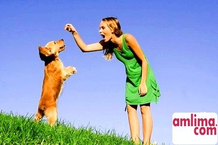 Дресирування собак - для чого і як тренувати свого вихованця?