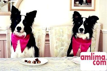 дресирування собак в домашніх умовах