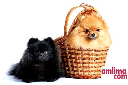 Грумінг собак