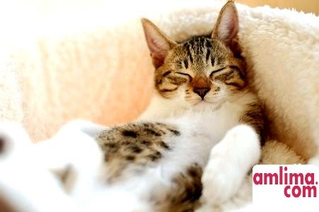 Як позбутися запаху котячої сечі? Вибираємо засоби і способи