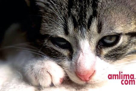 Як лікувати понос у кішки?