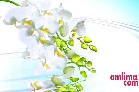 Як поливати орхідею в домашніх умовах?