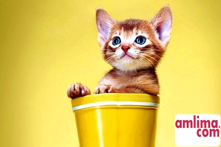 Як правильно годувати кішку?