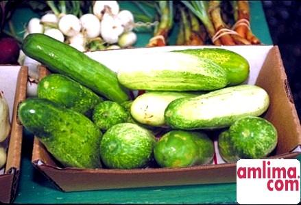 Як приготувати малосольні огірки - кращу сезонну закуску?