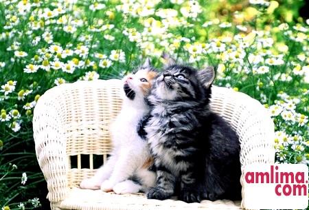 Яким повинен бути догляд за кішками?