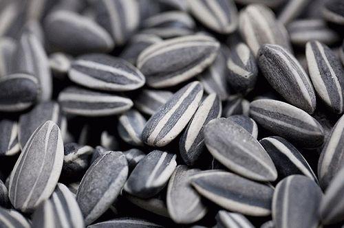 Можна насіння при грудному вигодовуванні (смажене насіння або гарбузове)