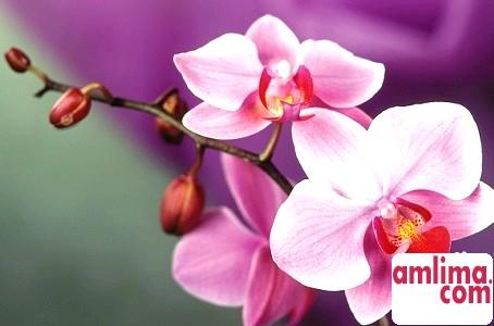 Настав час, орхідея відцвіла - що робити далі?