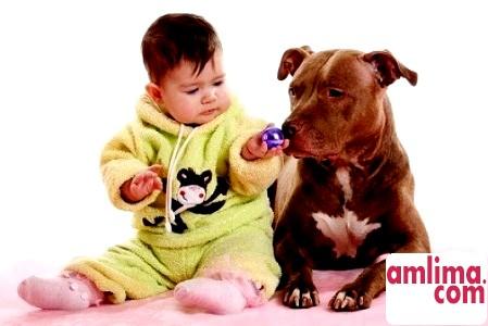 Дитину вкусила собака? Як цього уникнути, вибираємо собаку для дитини