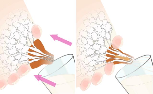 Фото - Як зціджувати грудне молоко руками