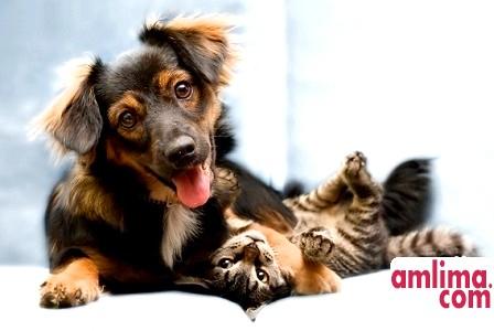 собаки і кішки