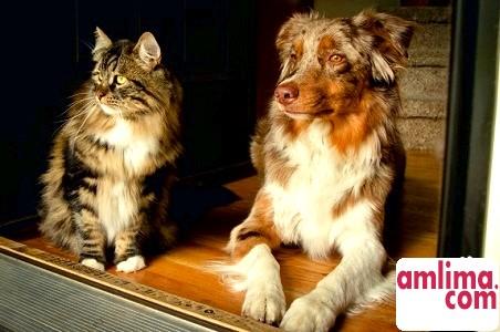 кішки і собаки