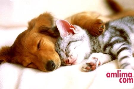 кішка і собака