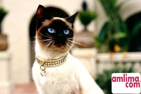 Стоп цистит для кішок - що це за ліки?