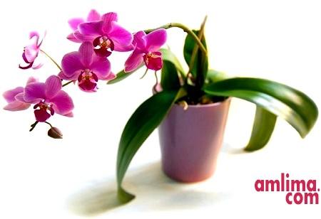 Догляд за орхідеями взимку: поради та рекомендації